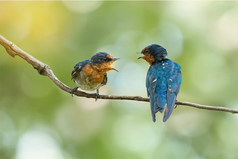 A couple of birds on a branch chirping at each other - couples therapy