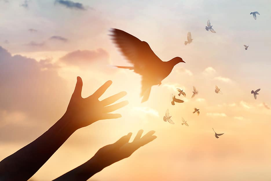 A dove being realised from someones hands, with a sunset background