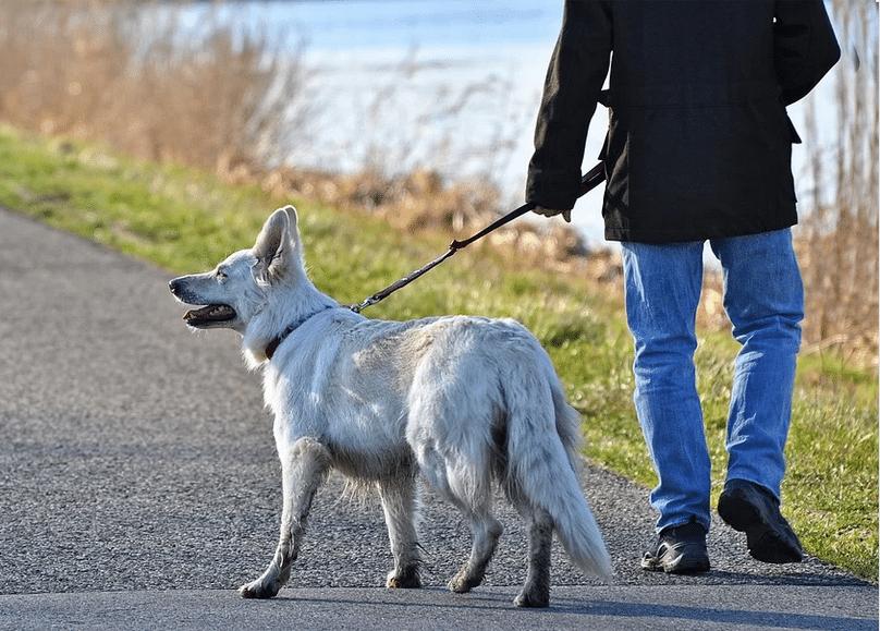 man-dog